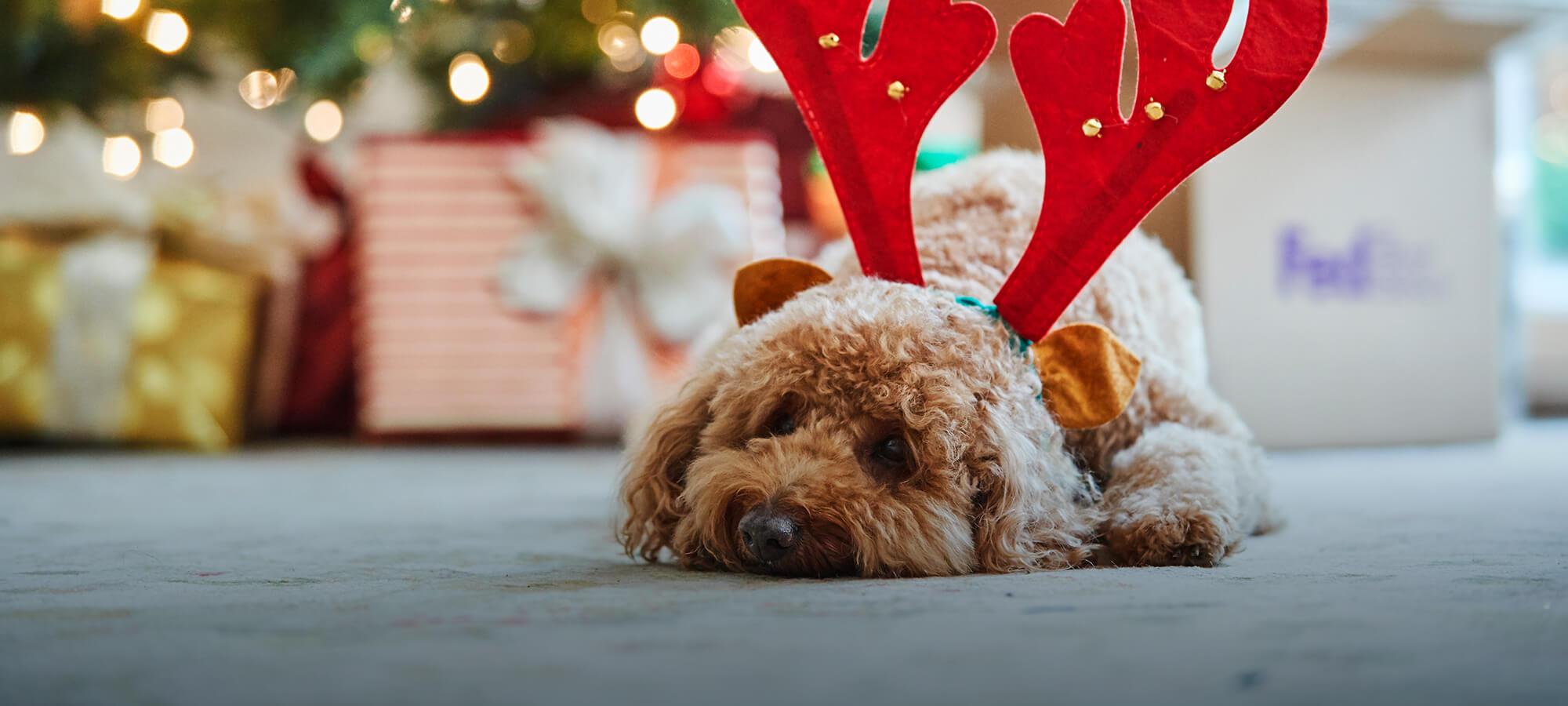 Cute dog wearing christmas antlers
