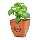 Dell Biodegradable Basil Kit